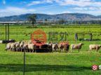 澳大利亚昆士兰Carpendale的土地,Gatton Helidon Road,编号50521538