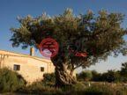 意大利AgrigentoMenfi的房产,Contrada San Vincenzo,编号33479077